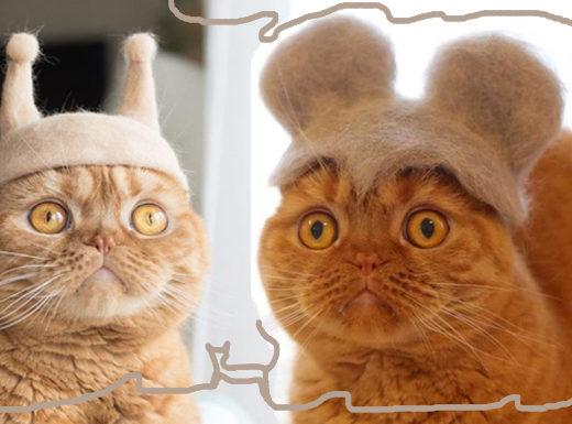 Котячий креатив